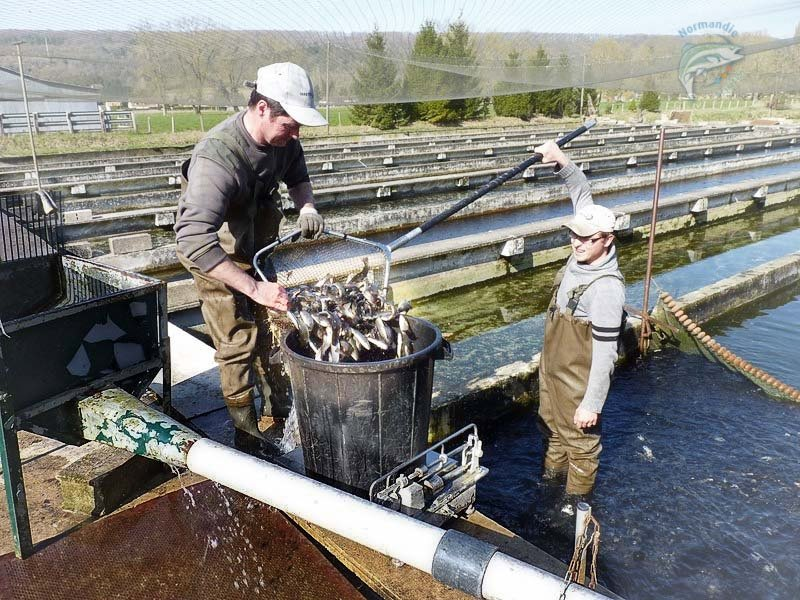 La logistique for Vente de poisson